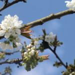 Frühling im Stiftland