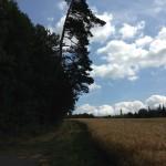 Steinwaldradweg