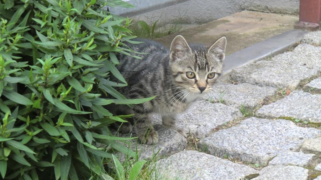 Kleiner neugieriger Tiger