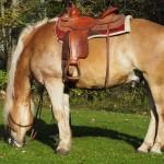 Pferd im Waldnaabtal