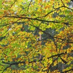 Goldener Herbst im Waldnaabtal