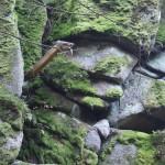 Drachenfelsen im Waldnaabtal