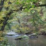 Herbstliches Waldnaabtal