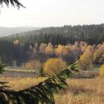 Oberpfälzer Wald
