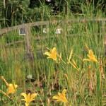 Sommer, Sonne, Blütenzeit im Naturerlebnisgarten