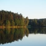 Waldsee Rothenbürger Weiher