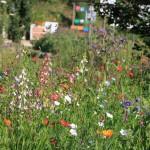 Sommer, Sonne, Blütenzeit im NEG KUBZ Umweltstation Waldsassen