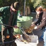 Oberpfälzer Teichwirte beim abfischen